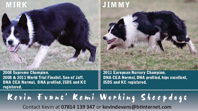 Stud dogs available from Kevin Evans
